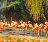 Vacances zoo de la Palmyre