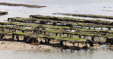 Cité de l'huître à Marennes d'Oléron