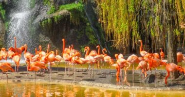 location camping proche zoo palmyre