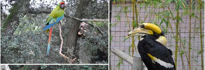 Découvrir le zoo de la palmyre
