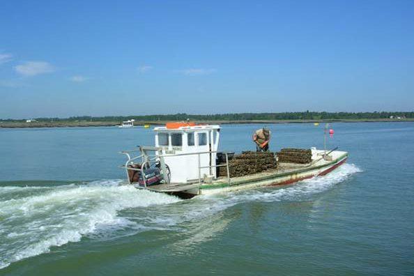 Pêche dans le bassin de Marennes d'Oléron